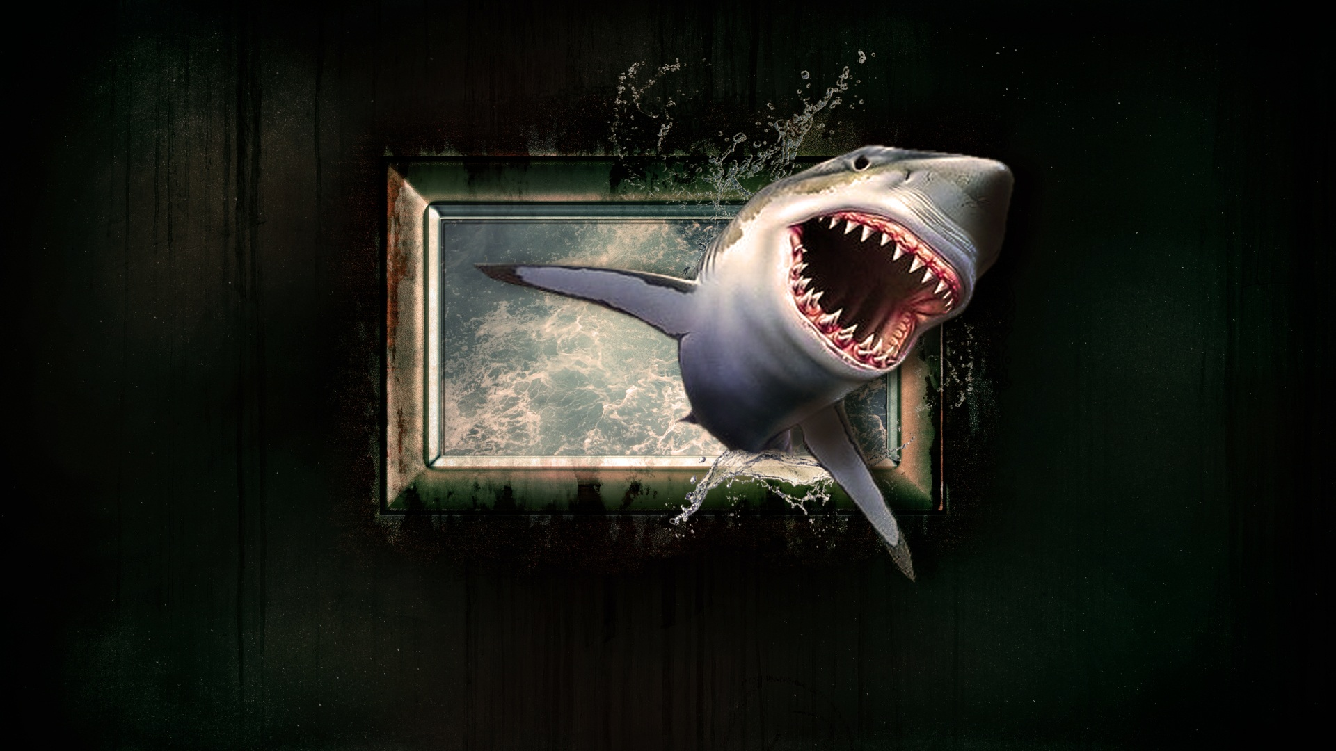 05 - Shark-Week.jpg