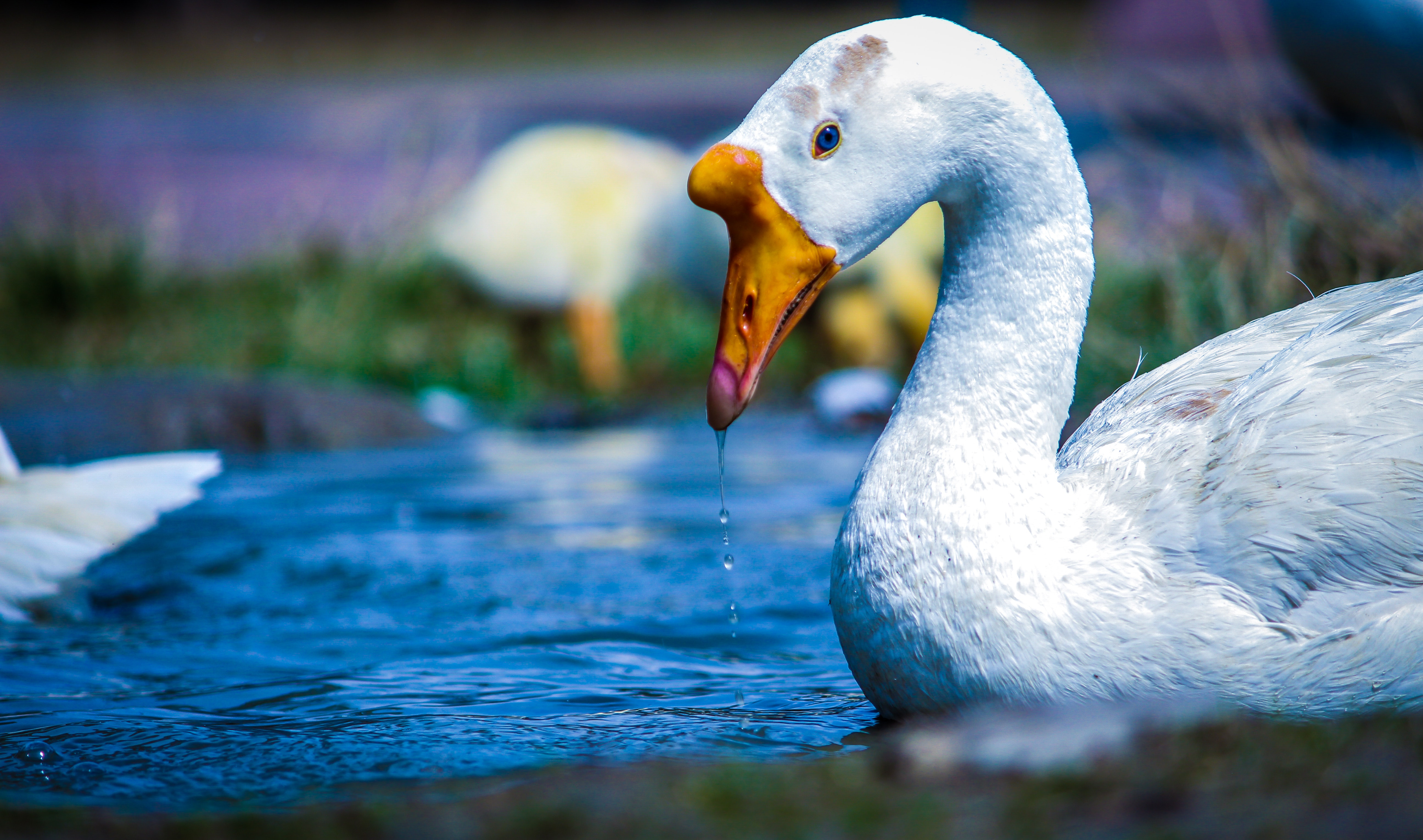 Flash-Fiction-Friday - FF-Vampire-Swans-Ate-My-Office-Building.jpg